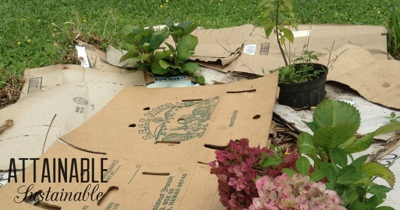 Cardboard as natural weed control.