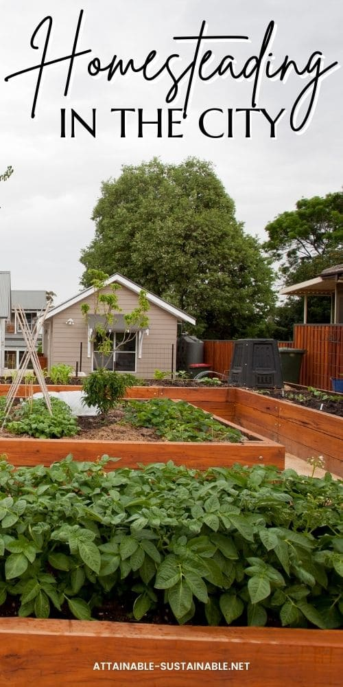 backyard urban homestead garden beds