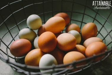 brown and green eggs in a wire basket