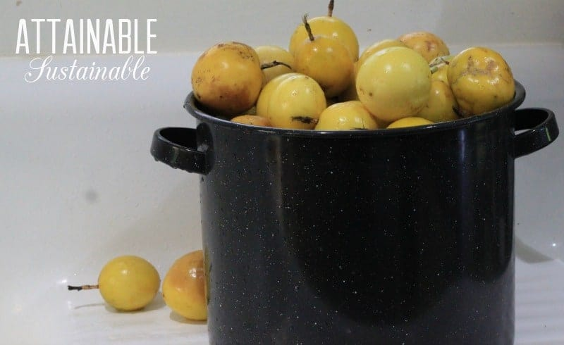yellow passion fruit in an enamelware pot
