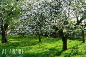 Urban Fruit Trees: Creating an Edible Landscape for a Small Scale Harvest