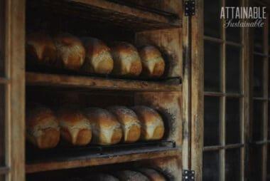 shelves of freshly made bread