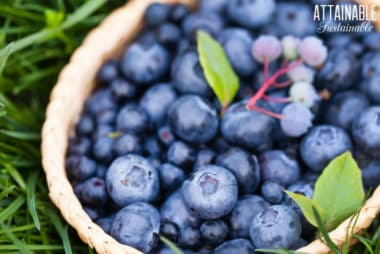 fresh blueberries in a basket