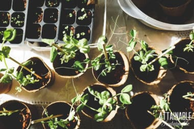 seedlings in containers from above
