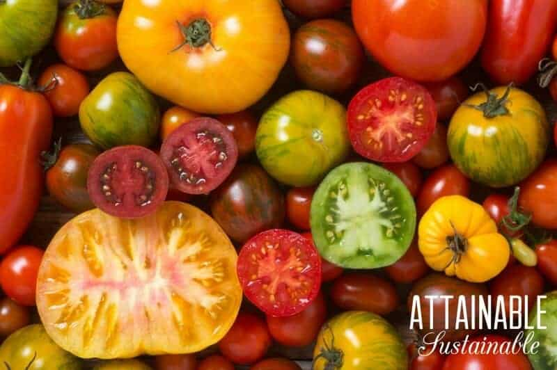 yellow, red, and green heirloom tomatoes
