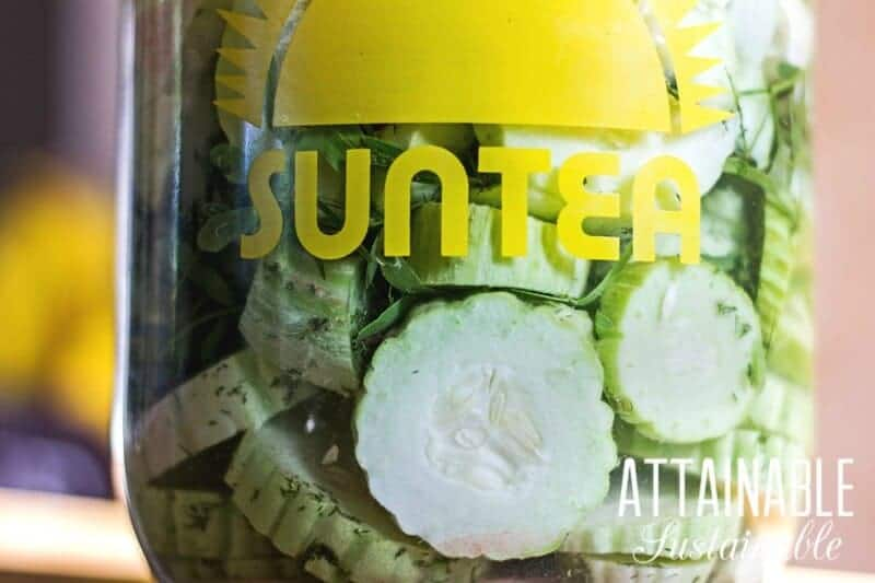"fermented pickles in a glass ""suntea"" jar"