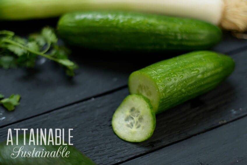 Fresh cucumbers on a black table