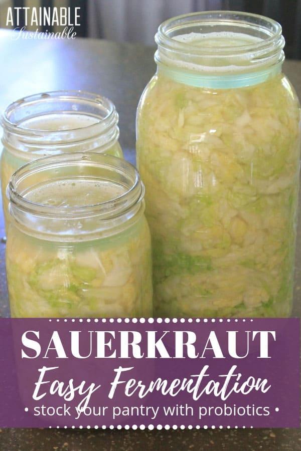 three glass jars full of homemade sauerkraut recipe (green cabbage)