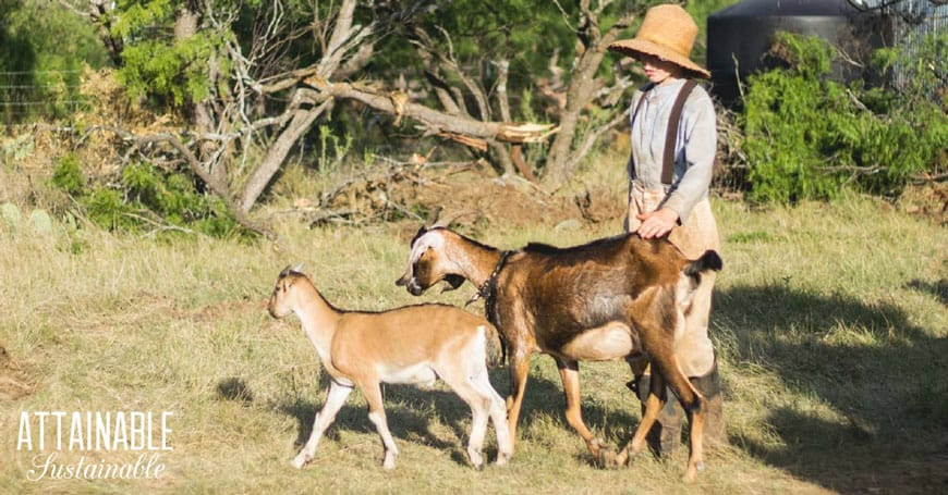 Goat Farming Basics: 5 Things You Must Consider Before Getting Goats