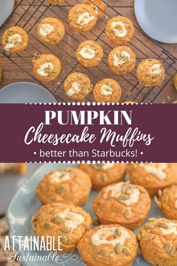 Love pumpkin cheesecake muffins? Try this better than Starbucks pumpkin muffin recipe for a fall-flavored sweet treat you can make at home for less. Pumpkin spice season can be all year round when you make these sweet pumpkin cheesecake muffins at home. Make them for an indulgent breakfast or dessert.   #breakfast #dessert #pumpkinspice #recipe