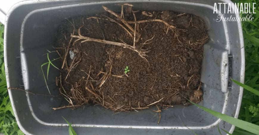 compost in a grey tub