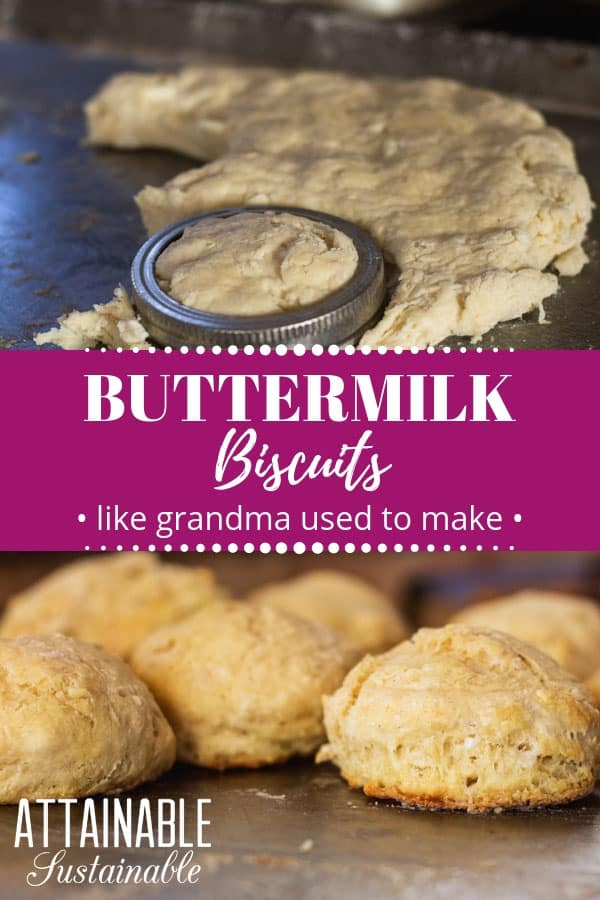 These old-fashioned buttermilk biscuits from scratch are the perfect last-minute accompaniment to a meal. They're great for breakfast, too! Homemade buttermilk biscuits are a quick bread and don't require any rise time. This means you can whip up a batch and in short order your kitchen will smell of freshly baked bread.  #baking #bread #homestead