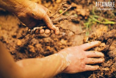 hands digging in the garden soil