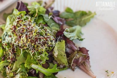 How to Grow Your Own Organic Broccoli Sprouts
