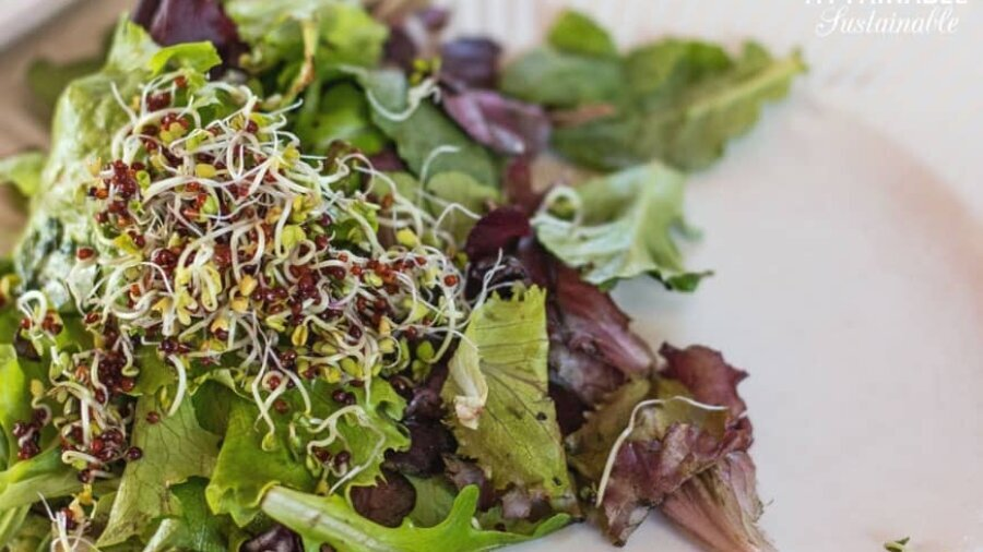 broccoli sprouts on a fresh salad
