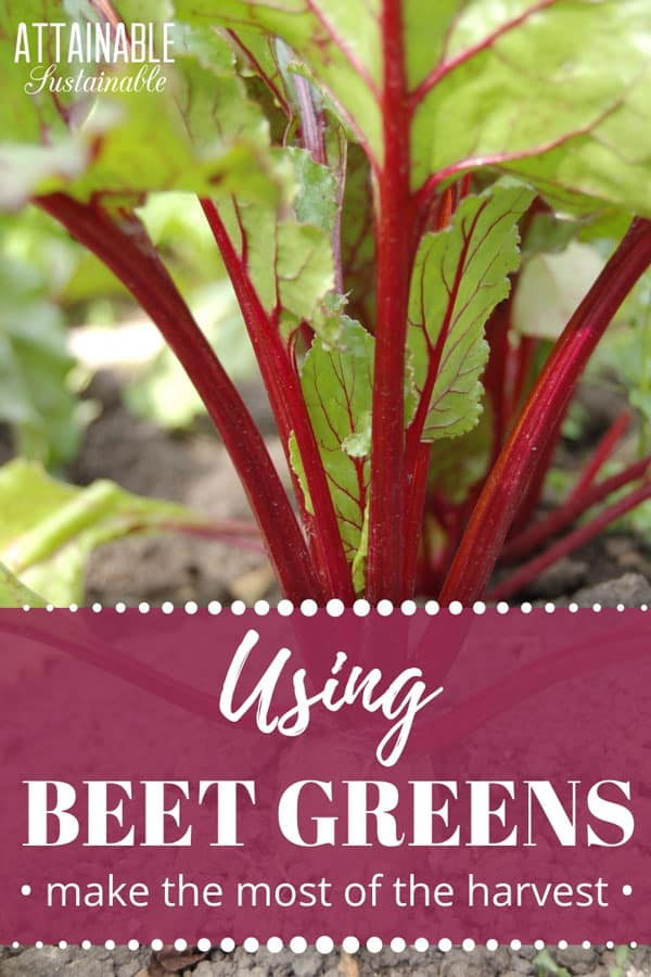 Wondering what to do with beet greens? They're not a common