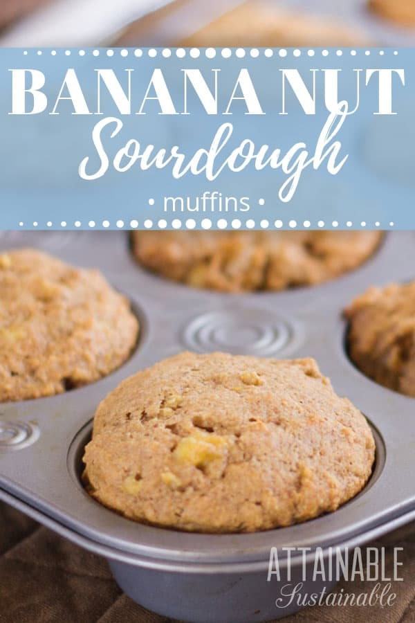 This banana nut muffin recipe starts with a basic sourdough starter. They're the perfect start to your morning and great for tucking into lunch boxes. Just don't tell you're kids that they're healthy! With a vegan option, too. #breakfast #baking #recipe