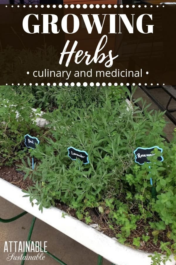 Wondering which herbs to grow in your garden? This list will give you some ideas! Some are great for cooking, others for medicine, & many are good for both. The good news is, herbs are easy to grow and nice looking, too. They make a pretty and useful addition to patio containers or your vegetable garden. #garden #herbs #homestead