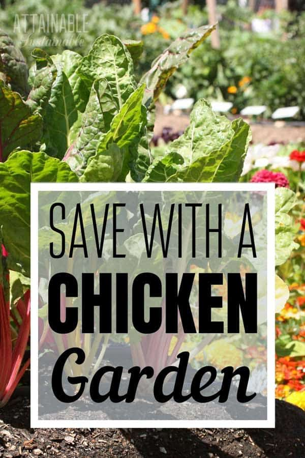 garden with kale