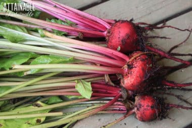 red beets with greens attached