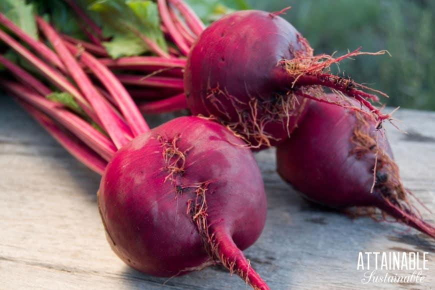3 fresh red beets on a wooden table