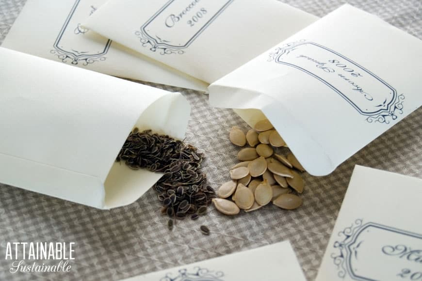 heirloom seeds spilling from white seed packets