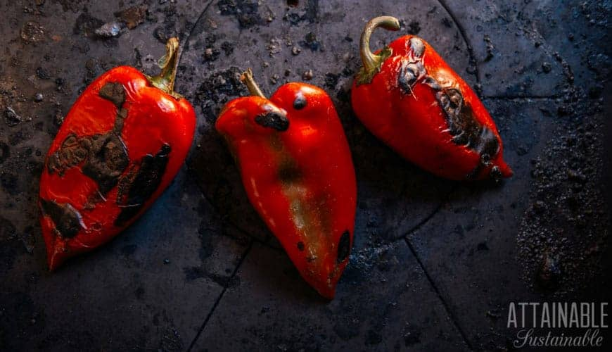 roasted red peppers on a dark background