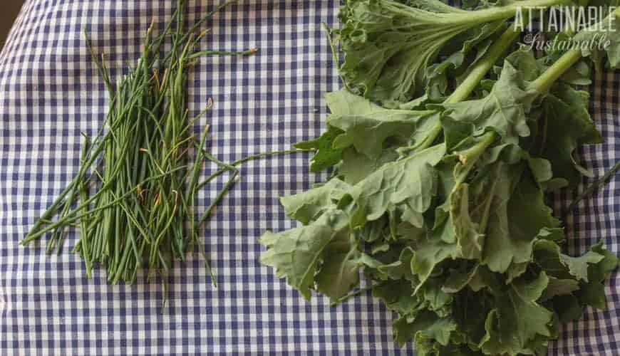 chives and kale on a blue gingham cloth