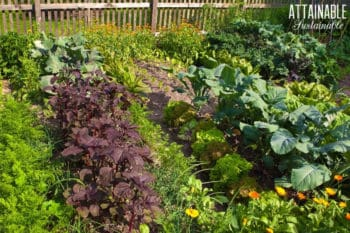 backyard 'victory gardens' with lots of kale and greens and vegetables growing
