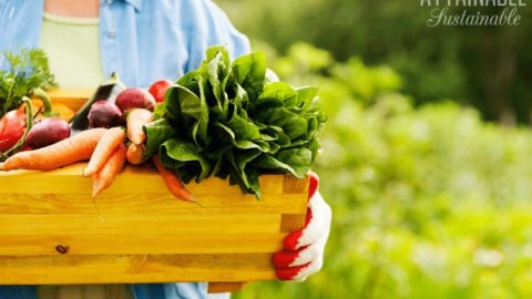 woman holding a box of fresh vegetables