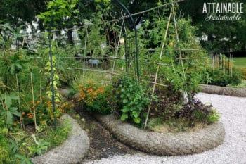 kitchen garden beds with veggies growing
