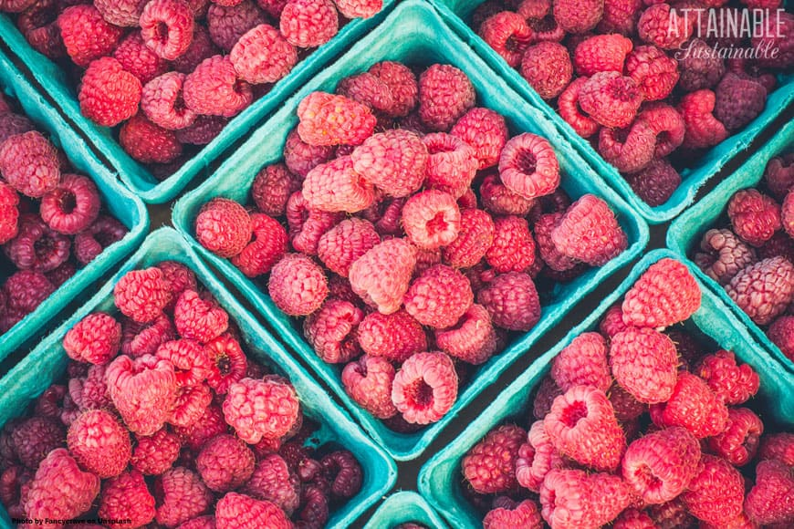 fresh raspberries in green paperboard boxes on the diagonal