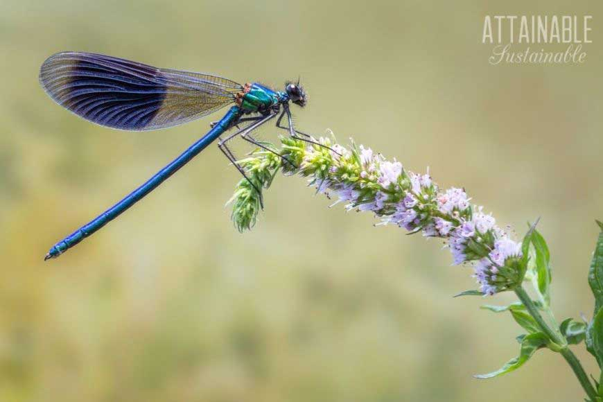dragonfly on flower stem