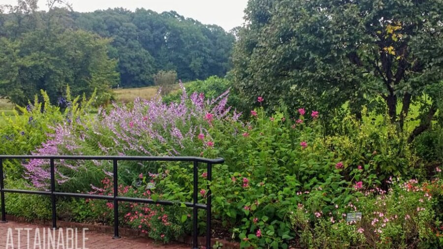 border planting of various salvia - purple and pink prominent