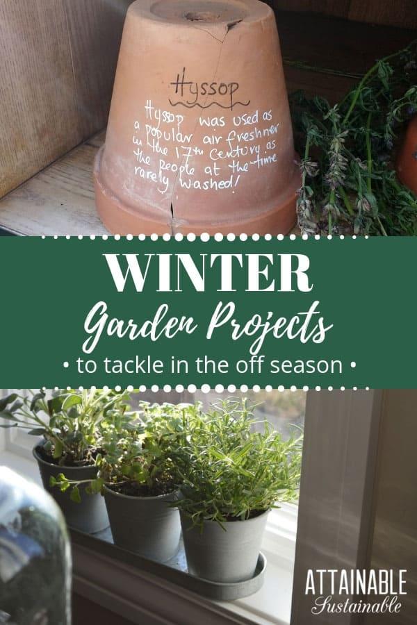 winter garden projects: Top, plant marker on clay pot, bottom, windowsill herb garden