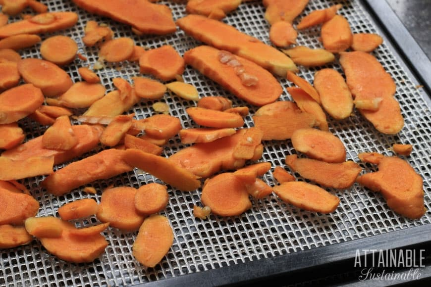 sliced fresh turmeric on dehydrator tray