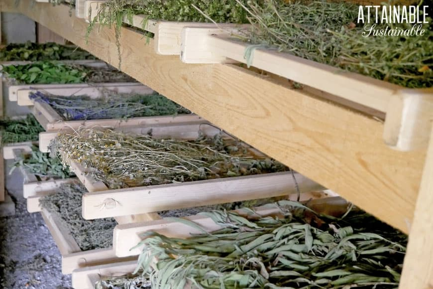 air drying various herbs on a wooden rack