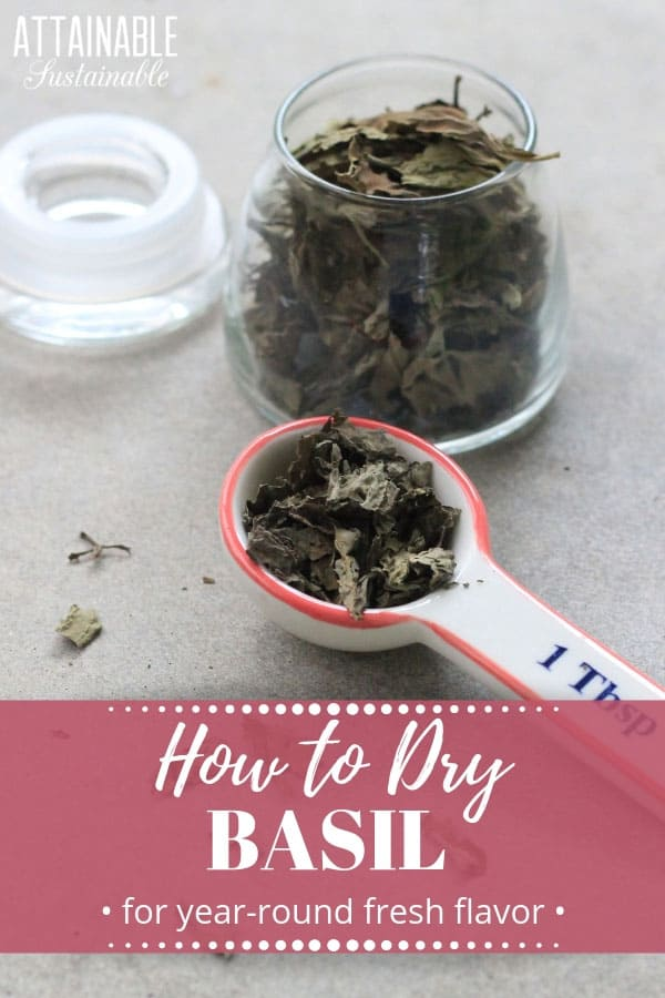 dried basil in a ceramic tablespoon measure, with more in a glass jar with words: how to dry basil in pink