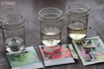 various seeds soaking in jars with vegetable seed packets