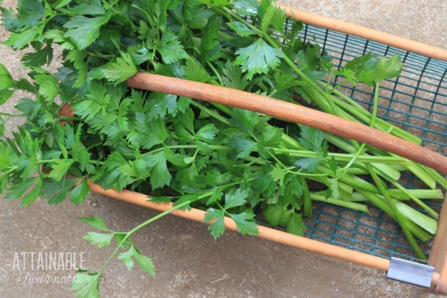 celery in a basket