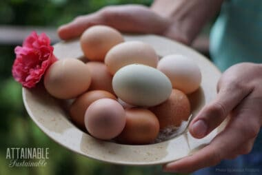 multi-colored eggs in a bowl with a pink flower, held by human hands
