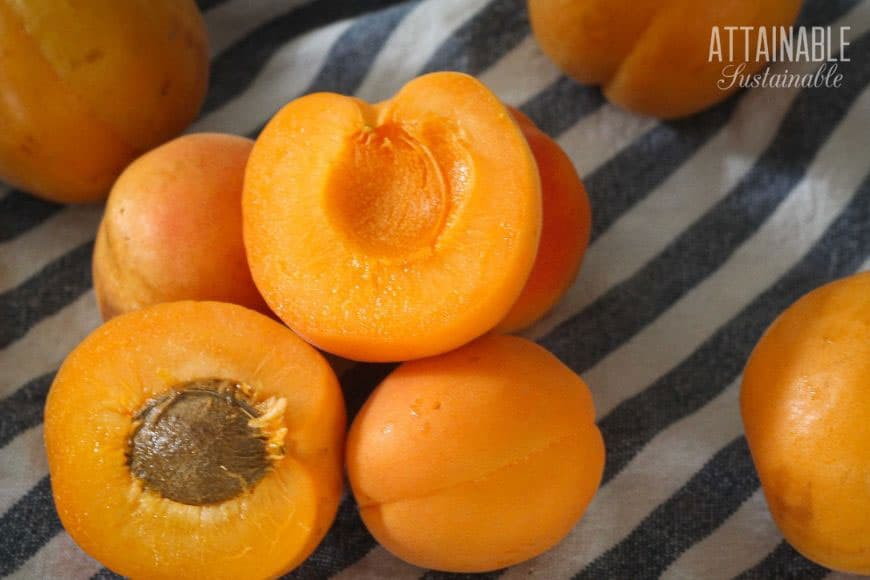 fresh apricots, one sliced in half