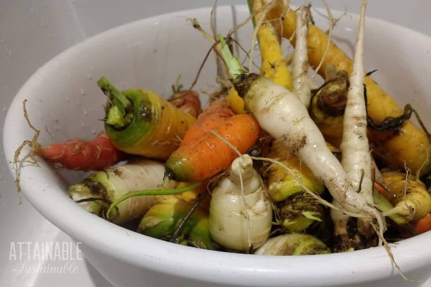 White, yellow, and orange carrots in a white bowl