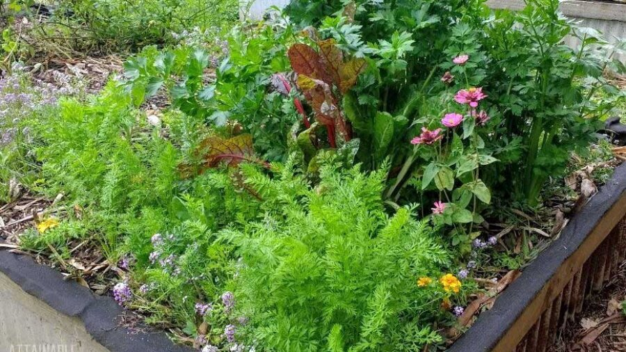 Small Garden Ideas: Get the Most Bang for your Buck!