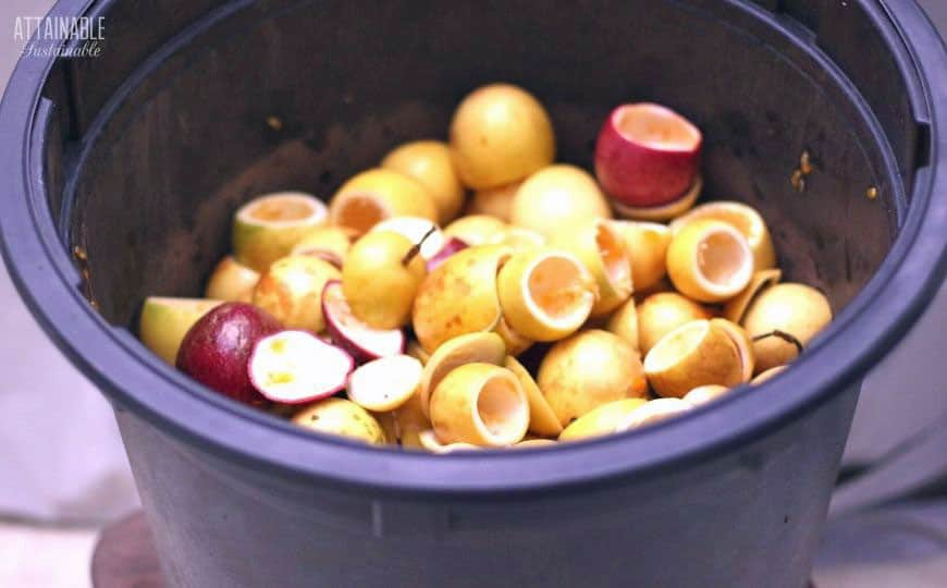 passion fruit shells in a black bucket