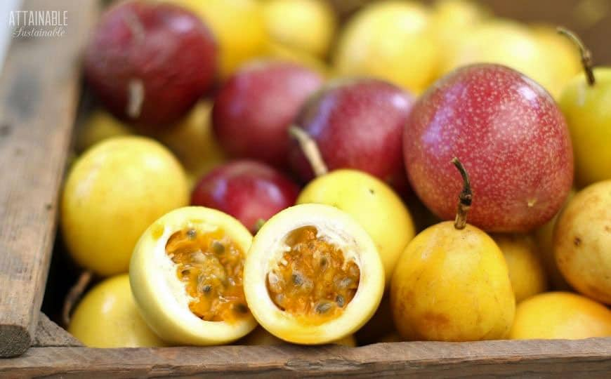 passion fruit , some with flesh showing
