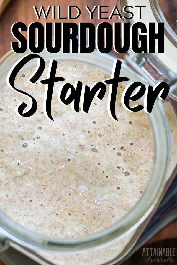 bubbly sourdough starter