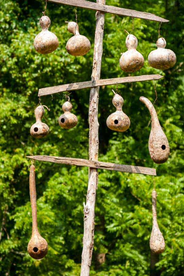 birdhouse gourds hanging