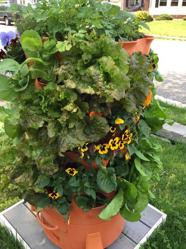 tower garden perfect gardening gifts!