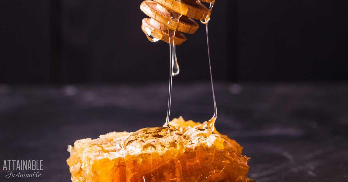 honey comb and dipper